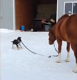 The Saturday Pet Blogger Hop: Horse Walking Dog