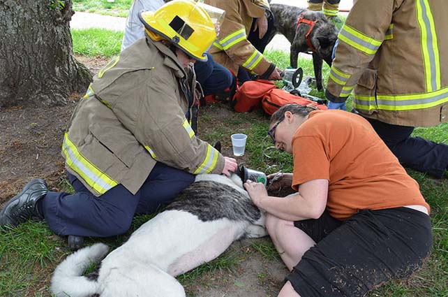 Two dogs caught in apartment fire rescued by firefighters