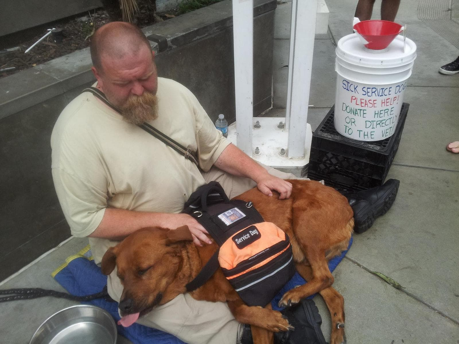 Community Helps Homeless Man Save His Dog