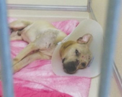 Injured dog placed under six-month quarantine