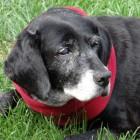 Teen helps older dogs find forever homes
