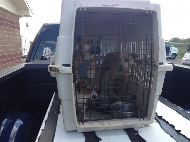 Police arrest man who abandoned three dogs inside animal carrier