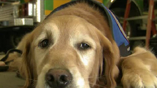School is in for emergency medical service dogs
