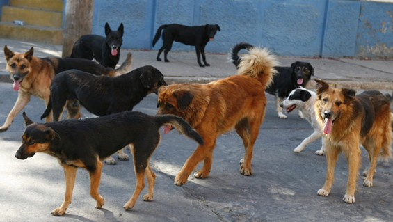 Six men arrested for poisoning and killing 200 dogs