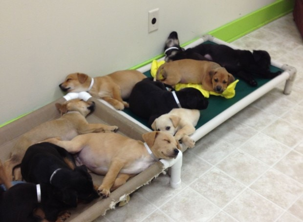 Authorities Searching for Person Responsible for Dumping Dog and Seventeen Puppies