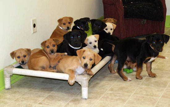 Homes Found for All Seventeen Puppies Dumped in Indiana Last Week