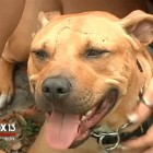Dog Survives Axe Attack & Is Ready for a Home
