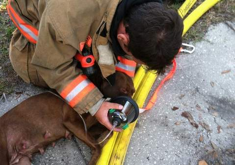 Firefighters Save Four Puppies from House Fire