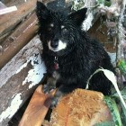 Dog Stands Guard over Body in OK Tornado; Owner Found Alive & Is Reunited