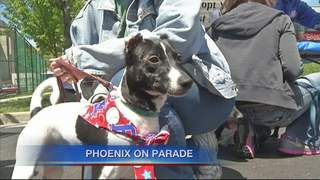 Phoenix Leads Dog Day Parade in Buffalo