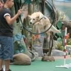 Denver Zoo's Bodie the Wonder Dog