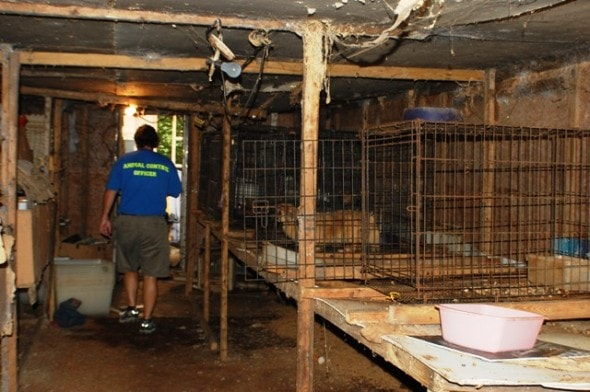 Georgia Puppy Mill Busted Owner Surrenders Dozens Of Dogs