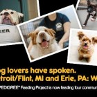 Three Metro Detroit Animal Rescue Groups Win Pedigree Food for a Year