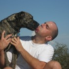 Poncho the Pit Bull Mix Kissing His Owner by I,JLantzy