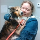 Reunited! Sheltie Found in Tree After Tornado is Back with Her Family