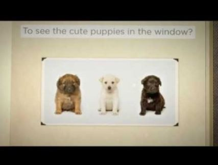 Where Do Pet Store Puppies Come From?