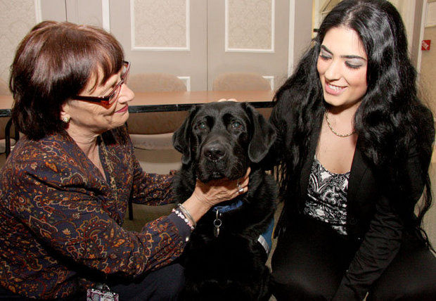 Comfort dog helps child testify in sexual assault case