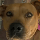 Dog Saves Home from Arson