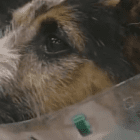 Dog Survives Being Hit by Three Trains