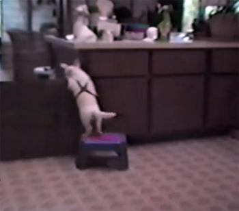 The Saturday Pet Blogger Hop: Canine Escape Artist