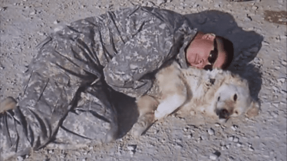 Beautiful Afghanistan Army Adorable Dog - fredie-590x331  Graphic_662325  .png
