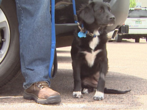 Puppy Hit by Train Survives