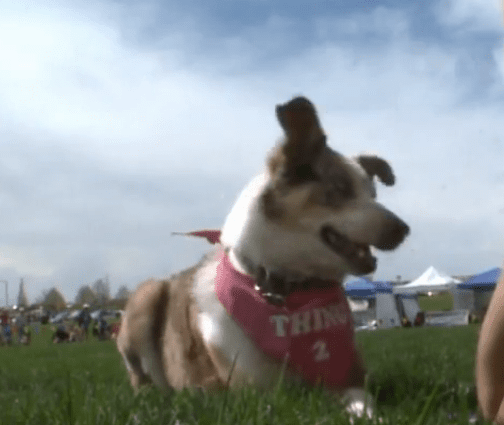 Three-Legged Frisbee Dog is an Inspiration