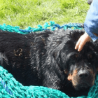 Dog Treads Water for Twenty-Four Hours to Stay Alive