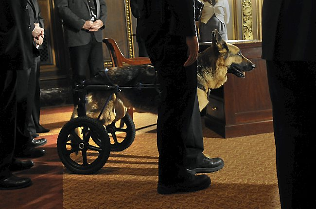 Retired Hero Police Dog Passes Away