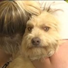 Woman Reunited with Missing Tornado Dog is Overcome with Emotion