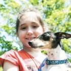 Mutt-Minster Raises $1210 for Animal Shelter in Missouri