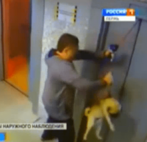 Quick Thinking Saves Pug from Elevator