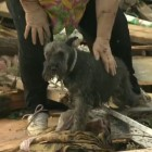 Video: Dog Buried in Tornado Debris Found During Owner's TV Interview
