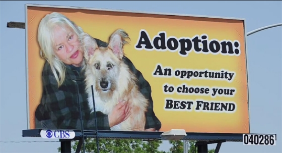 Dog Lover Changes Her Mind About Shelter Dogs and Pays for Billboard to Help Them.