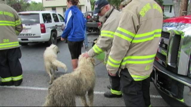 Dog Rescued and Reunited with Family for Mother's Day