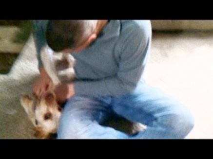 US. Airman Returns From Deployment, Welcomed Home by Puppy