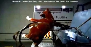 Crash Test for Dog Harnesses Shows 100 Percent Failure Rate