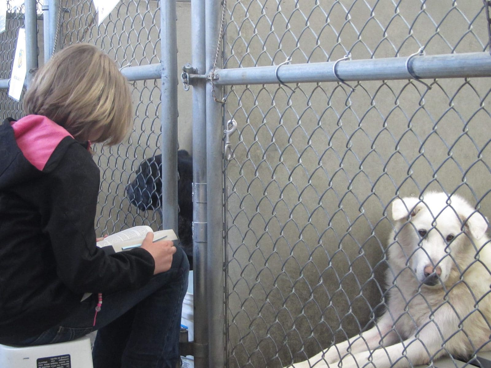 Children calm shelter animals by reading to them