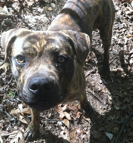 Dog living in the woods needs help finding a forever home
