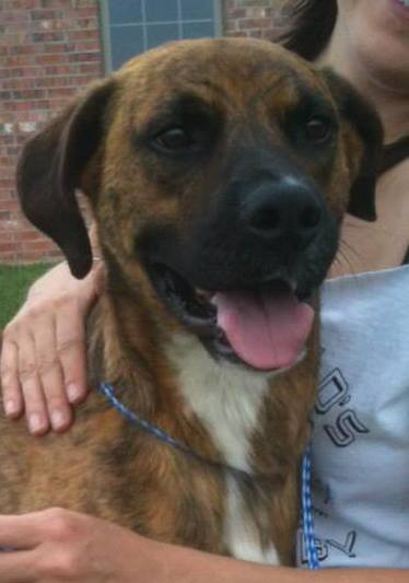 Dog Hit by Car Needs Forever Home
