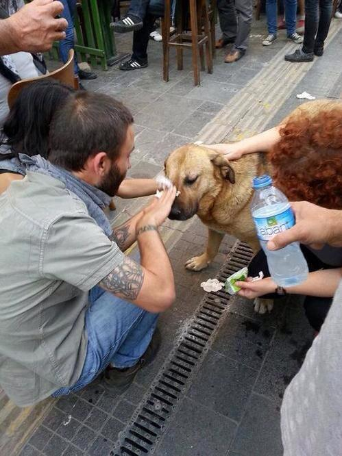 Dogs Get Pepper Sprayed During Turkey Protests