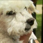 A Happy Ending for an Abused Puppy Mill