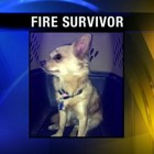Dog Survives Fire and Is Found in the Ruins