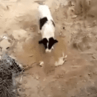 Dog Compassionately Buries Puppy