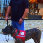 Veteran Finally Surrenders Service Dog to Save His Life