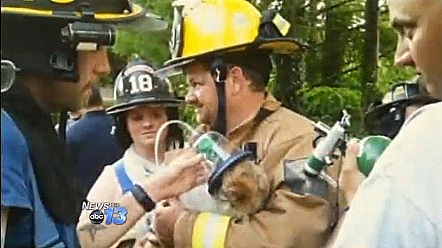 Firefighters Save Only Residents Home During Fire – the Dogs