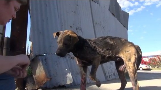 Street Dog is Rescued and Makes Miraculous Recovery