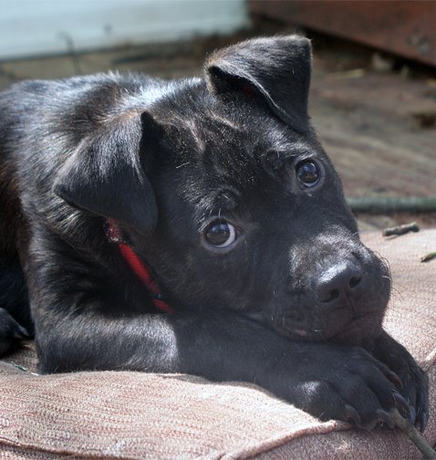 Feral Puppy Goes From Woods to Loving Family