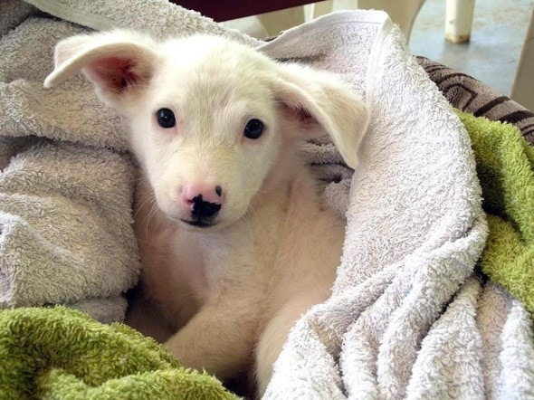 Dog That Looks Like A Towel He continues to look for a