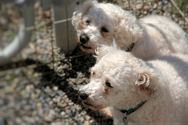 Collaboration Results in 17 Mill Dogs Rescued